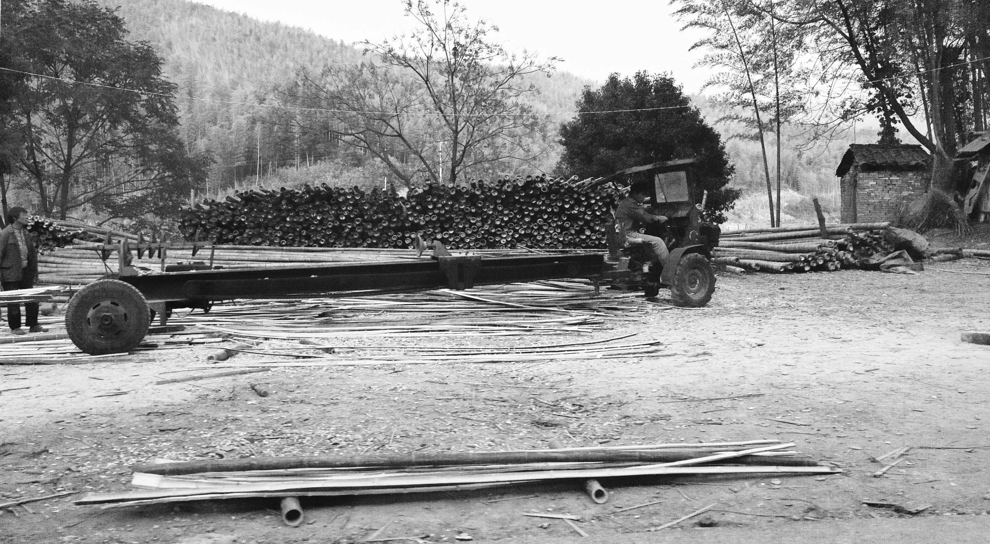 bamboo harvesting tractor