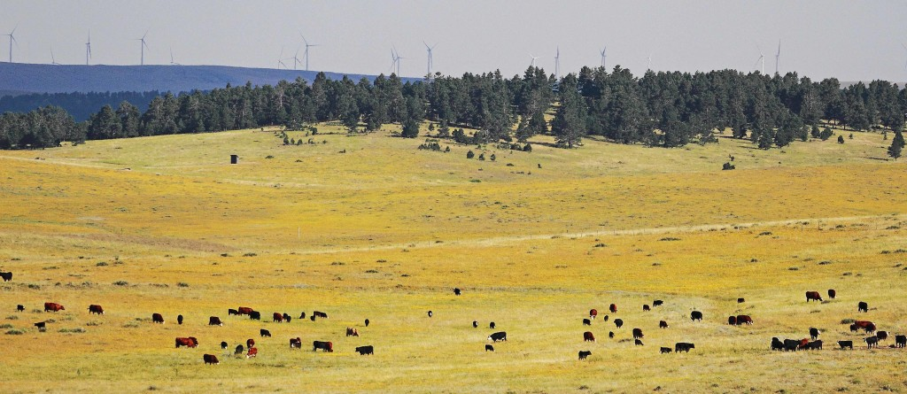 The cows, about a mile away, the tree line 2-3 miles, the windmills 20-25 miles.